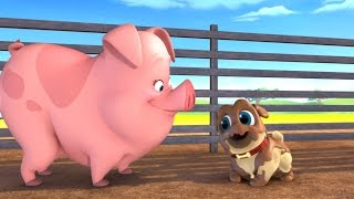 Download Puppy Dog Pals - Pigs and Pugs / Bob Loves Mona Video