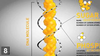 Download 18 Things You Should Know About Genetics Video