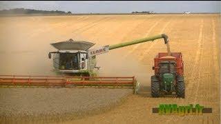Download XXL HARVEST - 2 CLAAS Lexion 780 dans le blé en 2013 Video