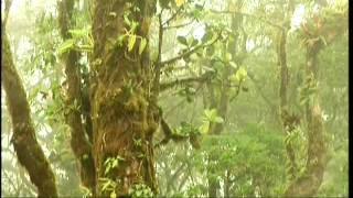 Download National Geographic - COSTA RICA - Paraíso Natural - Selubri. Video