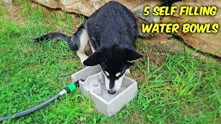 Download 5 Self Refilling Water Bowl For Pets Video