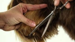 Download ALAA Australian Labradoodle Grooming Demo Video