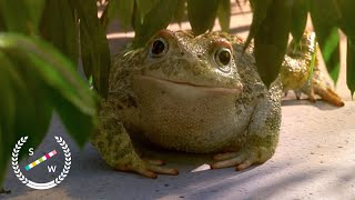 Download Garden Party | Oscar Nominated CG Animation | Short of the Week Video