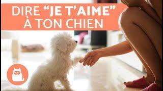Download 7 manières de dire à votre chien que vous l'aimez Video