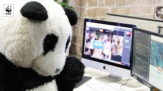 Download Hacking our way to a sustainable future   WWF-Australia Video