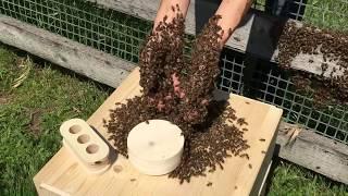 Download moving honeybee swarm into Bee Sphere Video