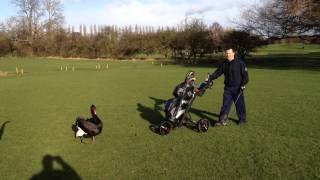 Download Golf Swan attack Video