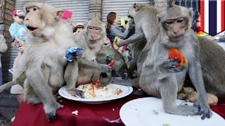 Download Monkey Buffet Festival: Monkeys in Thailand get their annual feast of fruits and veg - TomoNews Video
