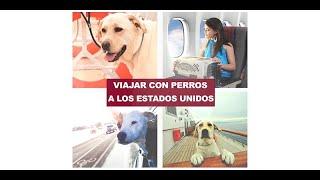 Download Cómo viajar con perros a los Estados Unidos Video