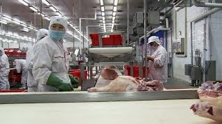 Download Who's behind the Chinese takeover of a U.S. pork producer? Video