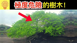 Download 6個會奪走你性命的【可怕樹木】!需立即逃命! Video