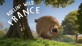Download Rollin' France - what if animals were round? Video