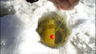 Download Epic Ice Fishing BATTLE With 20lb+ Monster! Video