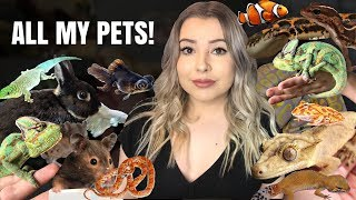 Download MEET MY PETS! (My 35+ Pets In One Video!) Video