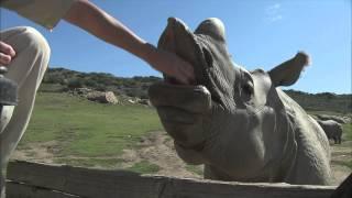 Download Rhinos Video