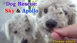 Download Sky & Apollo rescued while the Endeavour space shuttle flies over us - a MUST SEE. Please share. Video