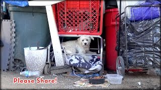 Download We Rescued A Dog Under A Shopping Cart, But You Won't Believe How This Story Ends! A Must See! Video