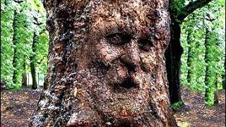 Download 50 Самых Необычных Деревьев в Истории Мира Video