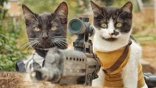 Download Cats vs Zombies Video