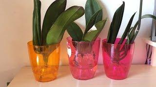 Download Как спасти орхидею без корней. Реанимация орхидеи в воде. Самый легкий способ реанимации. Video