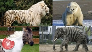 Download Top 10 Animals That Are A Mix of Two Species Video