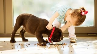 Download Dogs and Babies are Best Friends | 15 Minutes Video