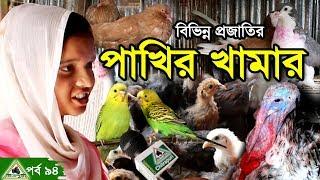 Download 94.Turkey,Pigeon Farm, হাইব্রিট টার্কি,সোনালী মুরগী,কবুতর ও বিভিন্ন প্রজাতি পাখির সমন্বিত খামার । Video