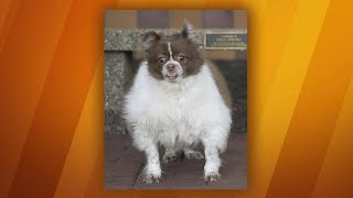 Download This Overweight Pup Lost 37 POUNDS By Exercising and Eating Rach's Dog Food! Video
