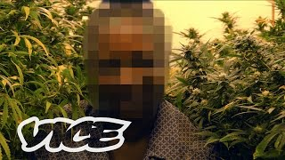 Download How Weed Laws Are Failing the UK Video