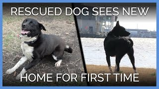 Download Rescued Dog Sees New Home for the First Time Video