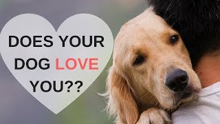 Download 8 Ways to Know Your Dog Loves You Video