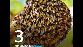 Download 蜜蜂及其他传粉者正在消失…… Video