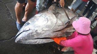 Download 900 pounds Giant Bluefin Tuna cutting for Sashimi Donggang fish market Taiwan Video