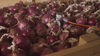 Download JC Watson Innovations - EC Onion Storage Video