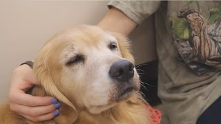 Download Roxy the therapy dog in action Video
