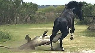Download Çılgına Dönmüş Hayvanların En İnanılmaz Karşılaşmaları Video