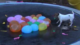 Download Spaz Attacks Water Balloons-Full Version Video