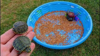 Download Rescued BABY TURTLES get their DREAM HOME!! Video