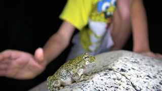 Download 4K CRAZY ANIMALS: The Raccoon Monkey Laser Cell Phone Frog. Herping Nature Fishing. CA AZ TX NM FL Video