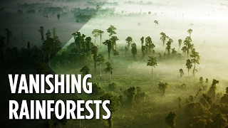 Download What Will The World Look Like When The Rainforests Disappear? Video