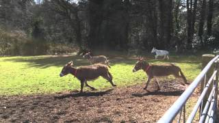 Download Donkeys enjoying themselves at Woods Farm Video