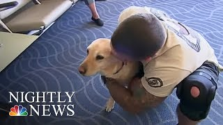 Download Meet The Woman Reuniting Vets With Their Retired Service Dogs | NBC Nightly News Video