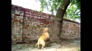 Download Psy są niesamowite Video