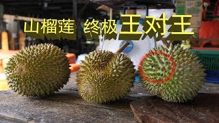 Download 马来西亚山榴莲终极王对王 | 榴槤| Durian The King of Fruit in Malaysia Video