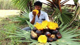 Download Farm Fresh PALM FRUIT Cutting and Eating In My Village   sugar palm fruit   village food taste Video