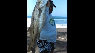 Download ROBALO 8 20 KG PLAYA AHIJADERO Video