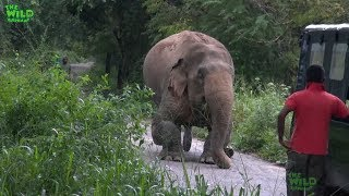 Download A Rescue Mission by a wildlife team: Humanity at its best, showing what humans can do Video