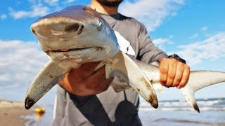 Download EPIC Surf Fishing ADVENTURE! (SHARKS and BULLS) Video