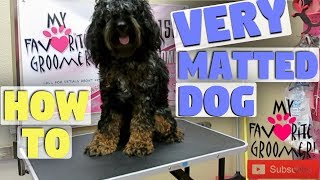 Download I've Been Accused Of Hurting A Very Matted Dog Video