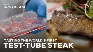 Download Tasting the World's First Test-Tube Steak Video